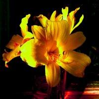 Жёлтая лилия :: Милла Корн