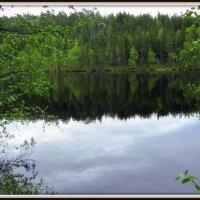 Озеро в лесу. :: Галина Полина