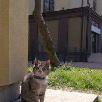 Тень и её кот.. :) :: Elena N