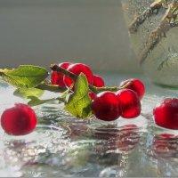 «Черёма»- значит смуглая, и ягод нет темней! :: Людмила Богданова (Скачко)