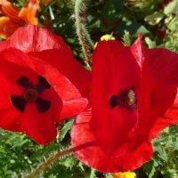 Цветы на клумбах Казанского речного порта :: Наиля
