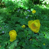 Лесные цветы. :: Владимир Кочетков