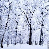 Зимушка-зима :: Татьяна Бронзова