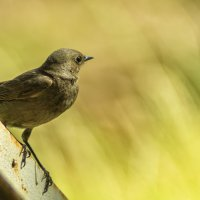 птица похожая на колибри :: Алексей Носков
