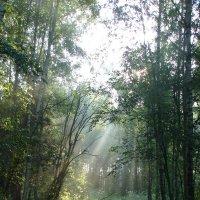 Утром в лесу :: Анатолий Аверкин