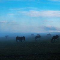 Лошадки в облаке :: Ольга Брага