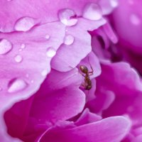 муравей и прекрасное :: Елена Баландина