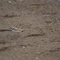 Птичка :: Георгий Морозов