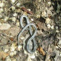 змея :: tgtyjdrf