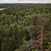 Финская природа :: Евгения К