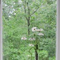 Дождь за окном. Июнь. :: Маера Урусова