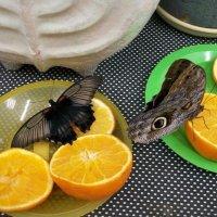 Бабочки предпочитают сладкое :: Галина Бобкина