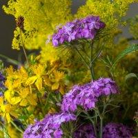 Полевые цветы :: catonbox