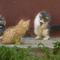 Кошачьи дети! :: Юля Колосова