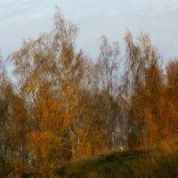 У осени пейзаж пастельный... :: Валерия  Полещикова