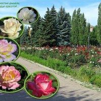 А розы нежностью дышали... :: Татьяна Смоляниченко