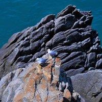 Море... камни... птицы :: Наталья Казакевич