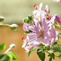 Полевые цветы :: Марина Грицай