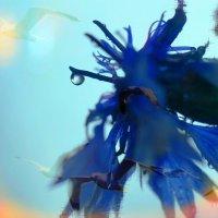 Синее лето :: Ирина Сивовол