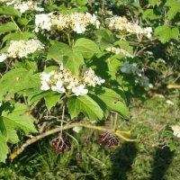 Встреча с осенью весной :: Лидия (naum.lidiya)