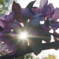 Весеннее солнышко :: Марина Егорова