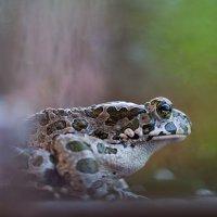 Зеленая жаба... :: Андрей Ветров