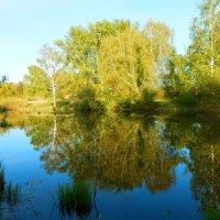 В зеркале озера :: Владимир Звягин