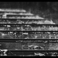 Дождь. :: Lidija Abeltinja