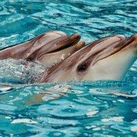 Из жизни дельфинов :: Vladimir Lisunov