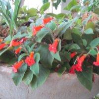 Красные цветы :: Дмитрий Никитин