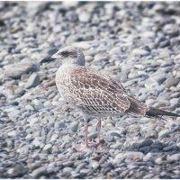 bird :: Милана Лесова
