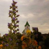 Храм в Старой Волотове :: Александр Прокудин