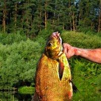 Золотая рыбка :: Va-Dim ...