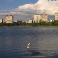 Удачная попытка (для чайки, но не для рыбки) :: Андрей Лукьянов