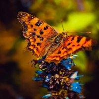 Бабочка :: Юлия