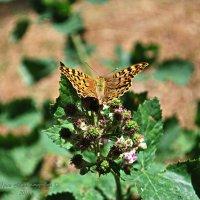Бабочка :: Юрий Владимирович
