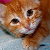 Котик :: Ксения