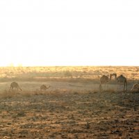 и в пустыне есть общение :: Александр Липовецкий