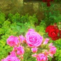 Роза :: Вероника Озем