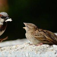 побалуй меня, папа! :: linnud