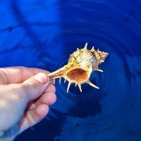 Ракушка из воды :: Света Кондрашова