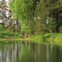 Зелёный уголок природы... :: марк