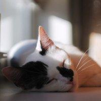 Дневной сон :: Дмитрий