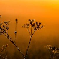 утренние красоты :: Олег