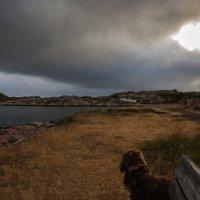 надвигается шторм :: liudmila drake