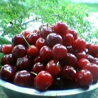 """""""Созрели вишни!"""" :: Миша Любчик"""