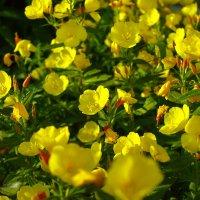 цветы :: andrew585 585