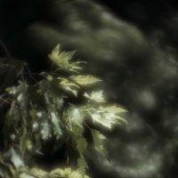 strang abstraction :: valeko