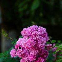 Цветок :: Николай Николенко