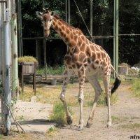 Летний день в Ростовском зоопарке :: Нина Бутко